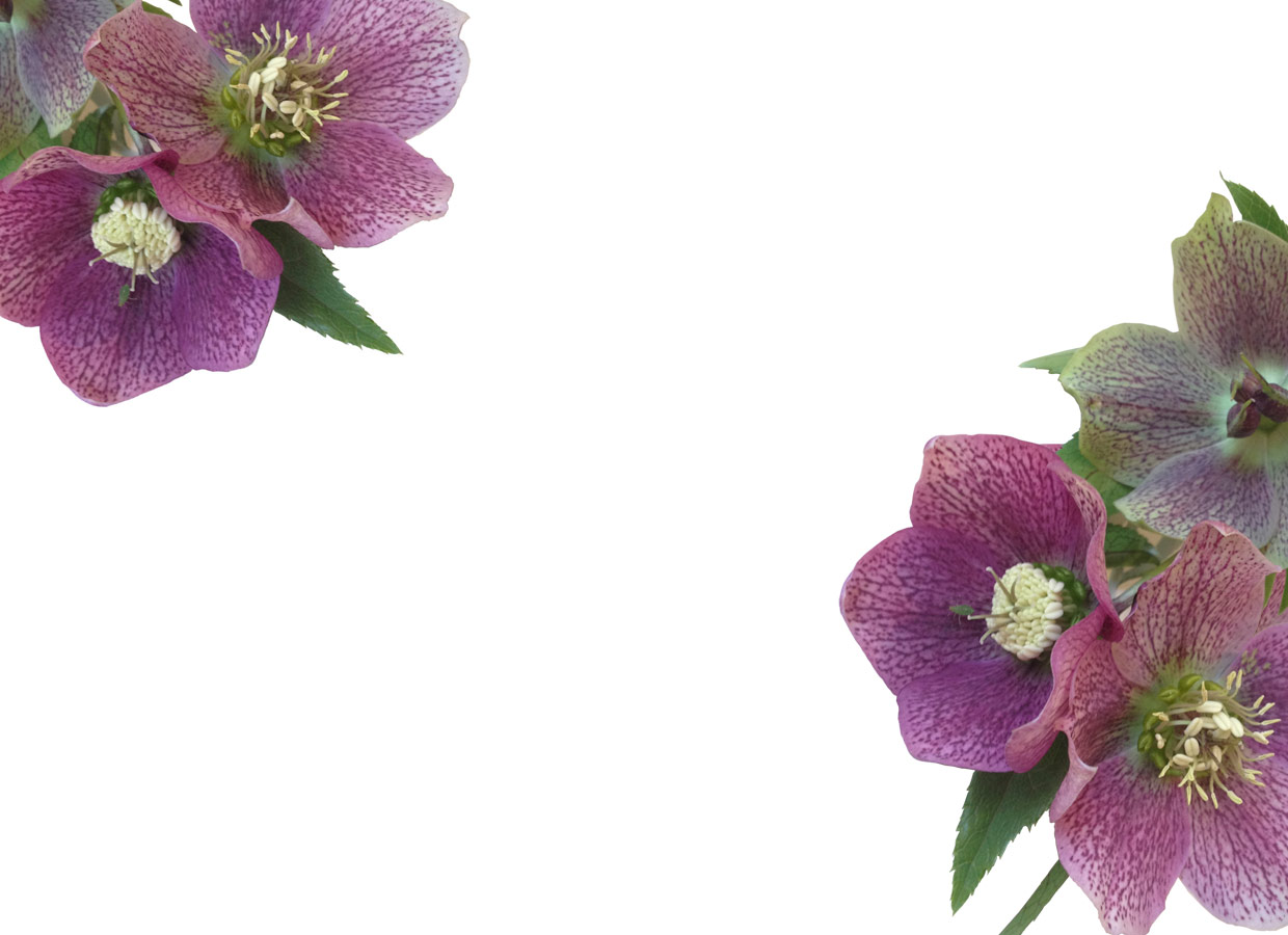 Welcome Wholesale Flowers And Supplies Autos Post